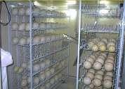 Productos de avestruz a la venta