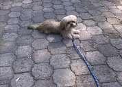 Escuela de adiestramiento canino, tu perro no se comporta como deseas llamanos
