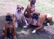 Soluciones y adiestramiento canino a domicilio