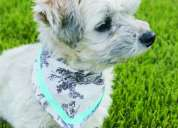 Aliipet accesorios para perro 449 277 2412