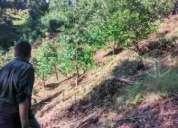 Terreno rustico en el campo con frutales