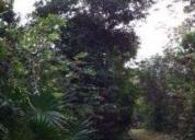 Buena inversion ruta de los cenotes terrenos