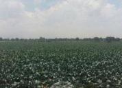 Excelente terreno cuapiaxtla, tlaxcala