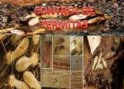 Fumigaciones en tijuana termitas