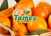 Distribuidora de naranjas tamez