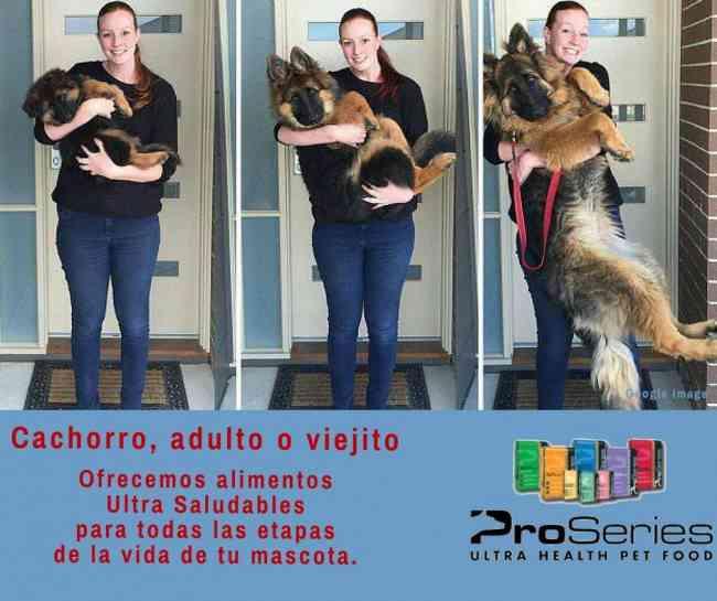 ProSeries, alimento para mascotas muy queridas
