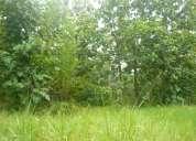 En vta 940 has. forestales con aserradero trabajando