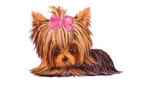 Hola busco adoptar un perrito me pueden dar información