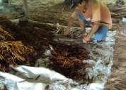 Venta de ayahuasca a todo mexico !!!!