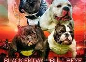 Monta hijo de bullseye promocion 5 perras