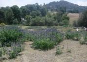 Vendo terreno poblado san felipe neri
