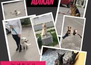 Escuela canina clases particulares