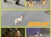 Entrenamiento canino,pension y correccion de conductas no deseadas