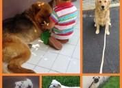 Escuela de educación canina, donde tu perrito aprendera a comportarse