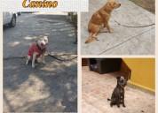 Cursos de entrenamiento canino a domicilio