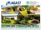 Fumigaciones en tijuana sanitizaciones