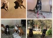 Entrenamiento y pensión canina a domicilio