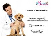 Solicito médico veterinario(a)