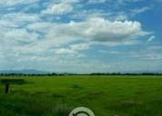 Excelente terreno colonia hidalgo durango 78 hectareas