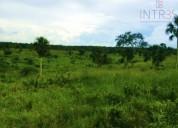 Rancho de 77 hectáreas akam balam en tizimín 77 m2
