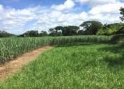 Oaxaca tuxtepec 34 hectareas terreno agricola siembra cana azucar 340000 m2