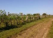 Preciosas hectareas a orilla de mar 30000 m2