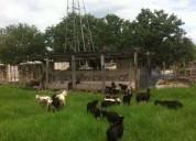 Hermoso rancho en cenotillo yucatan 383 hectareas 1 dormitorios 3830000 m2