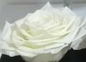 Aprenda a elaborar flores rehidratadas