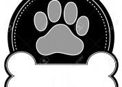 Cremación mascotas cuernavaca - plan de previsión