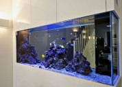 Mantenimientos de peceras marinas y tropicales