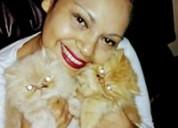 Hermosos gatitos persa