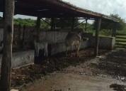 En venta 195 hectareas a 60 min de tizimin rumbo al tajo yalsihon 1950000 m2