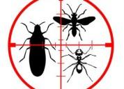 Curso de control de plagas cucarachas mip 4 horas