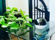 Mini cámara ip