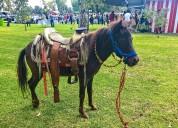 Renta caballitos pony para los mejores eventos