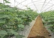 Vendo 6 5 hectareas con pozo de agua bodega industrial oficinas 64206 m2