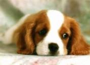 Naucalpan incineraciones para mascotas 66423850