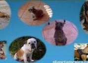 Adiestramiento canino - vamos a donde tu lo pidas -