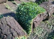 Venta de pasto en rollo natural huitzilac...