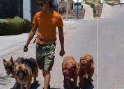 Paseo de perros mexicali; paseando perro mexicali