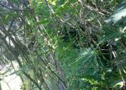 Vendo terreno de 1557 hectáreas en oxkutzcab