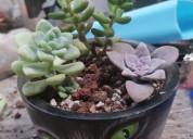 Cat nip arte y jardin