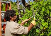 Jardineria residencial; jardinero los mochis