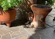 Venta de cachorros beagle